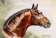 koń - horse chevaux