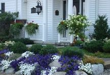 Our Work:  Annuals / Annual Color Displays in the Landscape