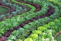 Design Inspiration:  Vegetable Gardens