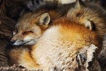D a r l i n g s / furry cuties