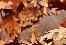 H ö s t e n / i fell fallingly for fall