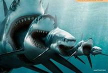 Animais - Tubarão