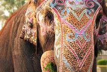 I LUV ELEPHANTS / by diana rice