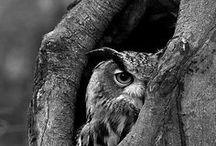 BAYKUŞ / OWL / by Başak Topkaya