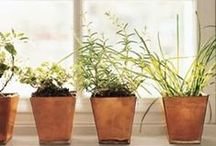 Indoor Gardening / Live in the city or an apartment with no outdoor space? Start an indoor garden! Many herbs and vegetables can be grown indoors, and houseplants are proven to remove toxins from the air and improve quality of life!