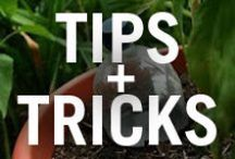 Gardening for Dummies! / Get a little dose of Gardening 101 with these helpful hints!