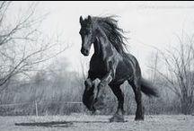 The horses I want