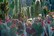 Gardens ❀ ✿ ❁ ✾ ✽ ❃ ❋