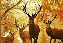 Nature, Animals and Wildlife / The Beauty of the World at one place / by Wildlife Experience