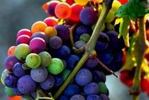 Vine to Wine / Ahhh...grapes, the candy of the Gods.  Wine, a bit of sunshine in a glass! / by Dan Spence