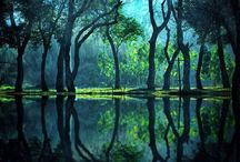 Scenery - Forest
