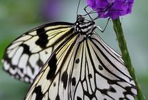 Butterflies, moths & others of the insect world / With the odd dragon fly too
