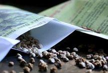 Semences / Tous les articles en lien avec la production, la récolte et la conservation des semences.