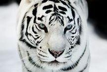hermoso!!!!