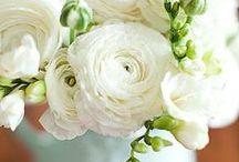 Virágok / gyönyörű, kedvenc és érdekes virágok a világ minden tájáról