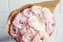 Fleurs coupées / cut flowers