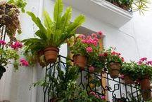 Jardin au balcon
