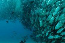 Animal Kingdom   Sea