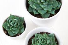 DIY mit Pflanzen / Bastelideen mit Pflanzen: Tillandsien, Air Plants, Kakteen, Monstera. DIY Blumentöpfe, DIY Makramee Blumenampel, Pflanzen verschenken