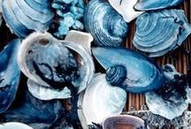 OCEANIC CORAL & SHELLS. / Surrounded by the ocean, we find inspiration.