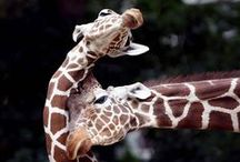 pets of the wild / this is a interesting board about the pets of AFRICA!!!!!!!!!!!!:)