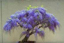 bonsai&plant