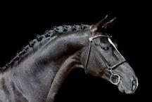 chic horses (equestrian) / by Yoshiki Yamanashi