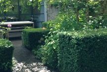 A LITTLE GARDEN IN NOTTING HILL / Transformed with interesting planting