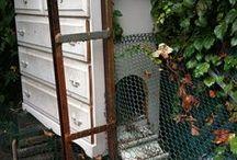Poules * Hens