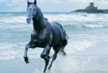 cavalli / foto, accessori per i  cavalli