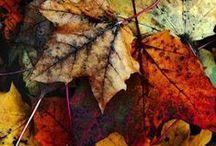 Japanese autumn & world autumn