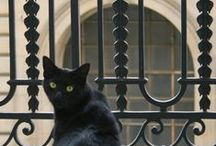 Black Cats / I can't have a cat so I have a cat board too in honour of my black cat PJ.