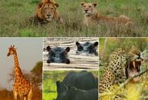 Take Me On An African Safari / The number 1 on my bucket list.Someday I will go there. / by Tara Battaglini