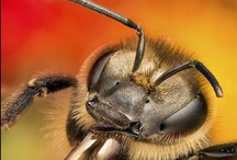 bees. / backyard bees are fun