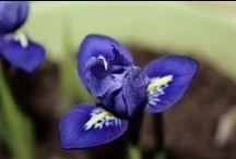 Мои цветы / Домашние цветочки