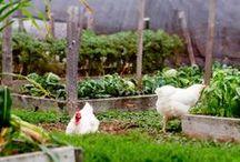 Underbara trädgårdar / Trädgårdar att njuta i och tänk att ha sin egen odling.