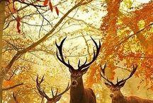 Season ~ Autumn / Sparkly cosy warm fall