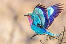 beatiful birds