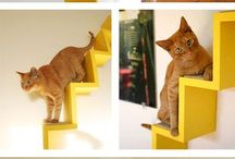 Home ideas for cats