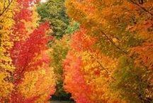 Fall is My Favorite Season! / by Josie Rinehart