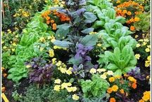 green finger. / Ideas for our growing garden. / by Kym Piez