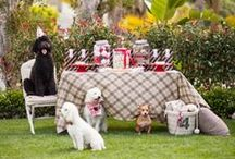 It's a Dog Party / Parties aren't just for the people. This is a birthday celebration fit for a  Poodle prince!