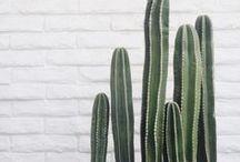 • Cactus