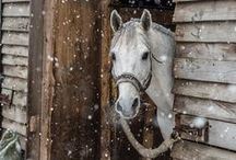 HORSES IN SNOW / The beauty of these wonderful creatures stand out so much more in the snow.