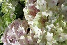 flowers, plants, trees
