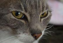cats, pets, animals