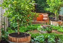 Heligan's Garden V2