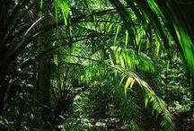 Vegetation / vegetation green nature