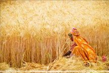 Harvesting in the world / Pictures and portraits about harvesting