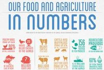 Learning about agriculture / Some of the best infographic about agriculture and animal farming on Pinterest.